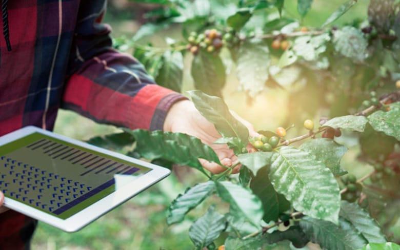organik tarım sertifikası