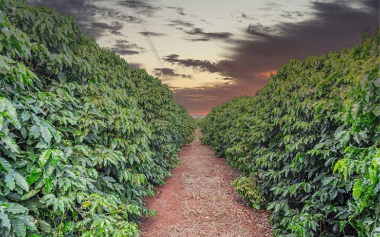 _0054_organik-kahve